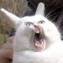mr_bunny