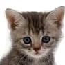 general_kitten